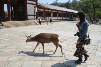 Deers wandering around the temple