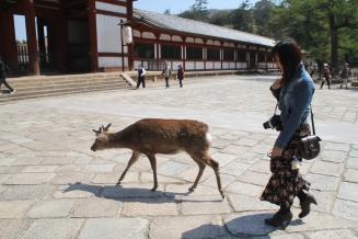 Deers wandering around the temple